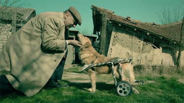 Ein Mann im Trenchcoat streichelt einen Hund, dessen Hinterteil in einem Gestell mit Rollen fixiert ist
