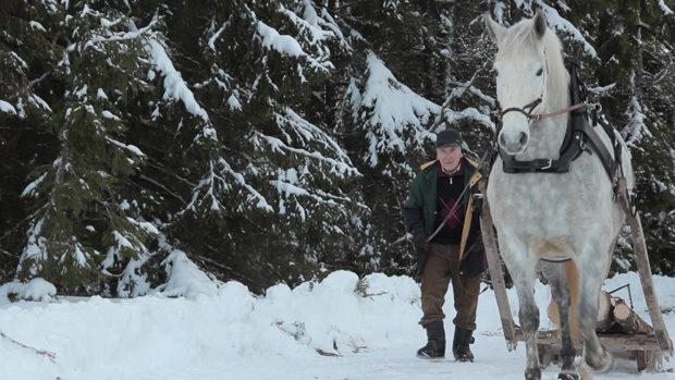 An old man guiding a mildew that draws a trunk through the snow
